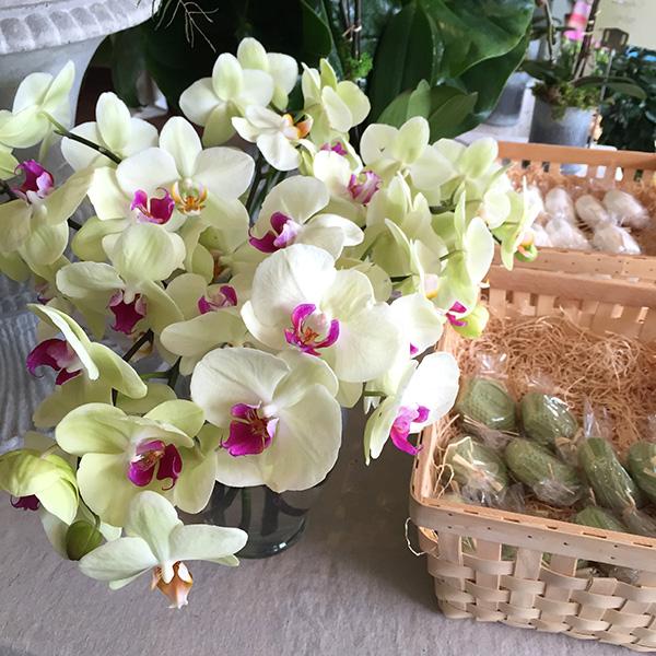 orchids soaps
