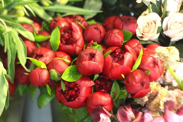 red peopnies