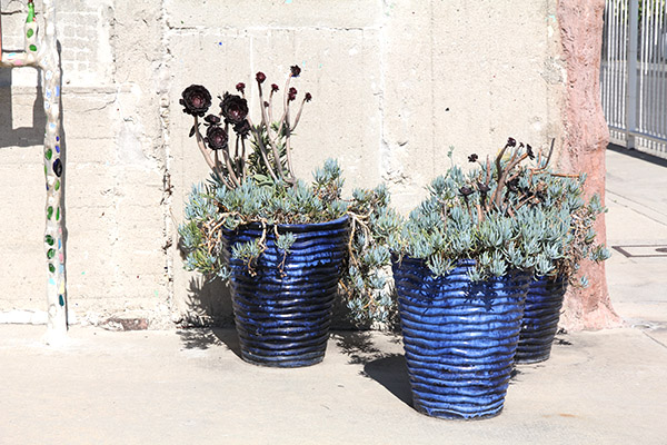plants at watt